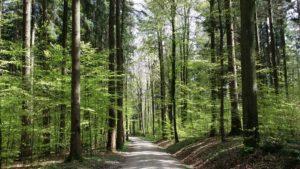WALDbaden: Erfahrungsbericht im Lauterbacher Anzeiger